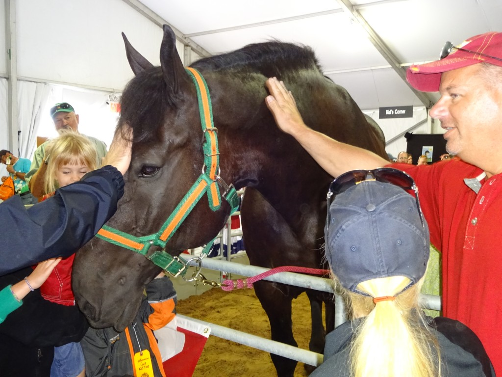A personable persheron named Murphy soaked up attention at the new Equine Avenue.