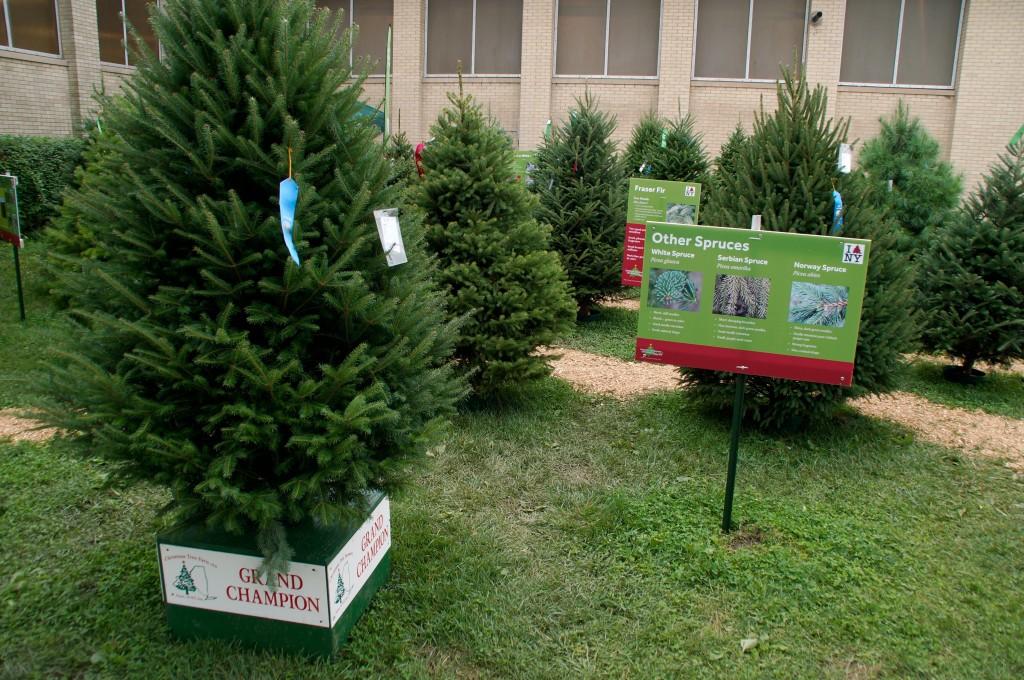 CHRISTMAS TREES2 15
