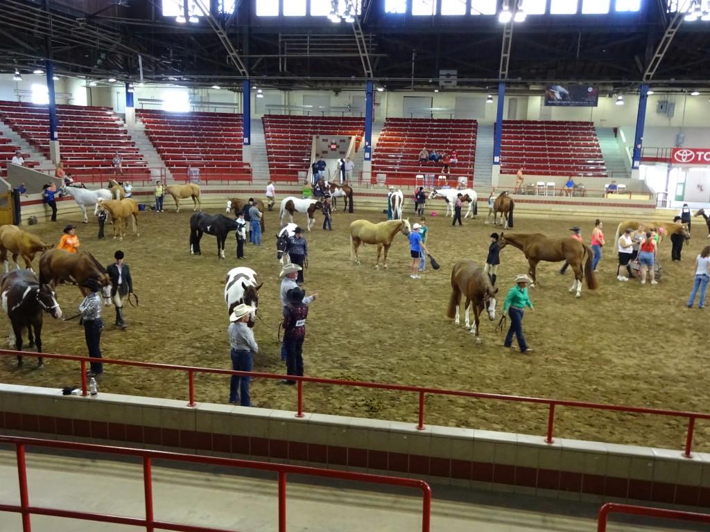 horse-show-aug-16
