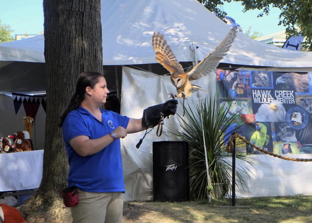 LANDING OWL 16