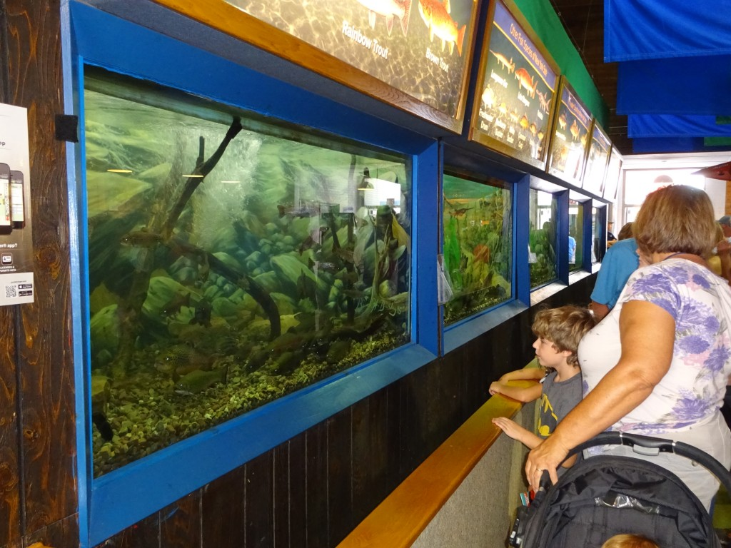 The DEC fish tanks, located in the colonnade, attract wildlife fans of all ages.