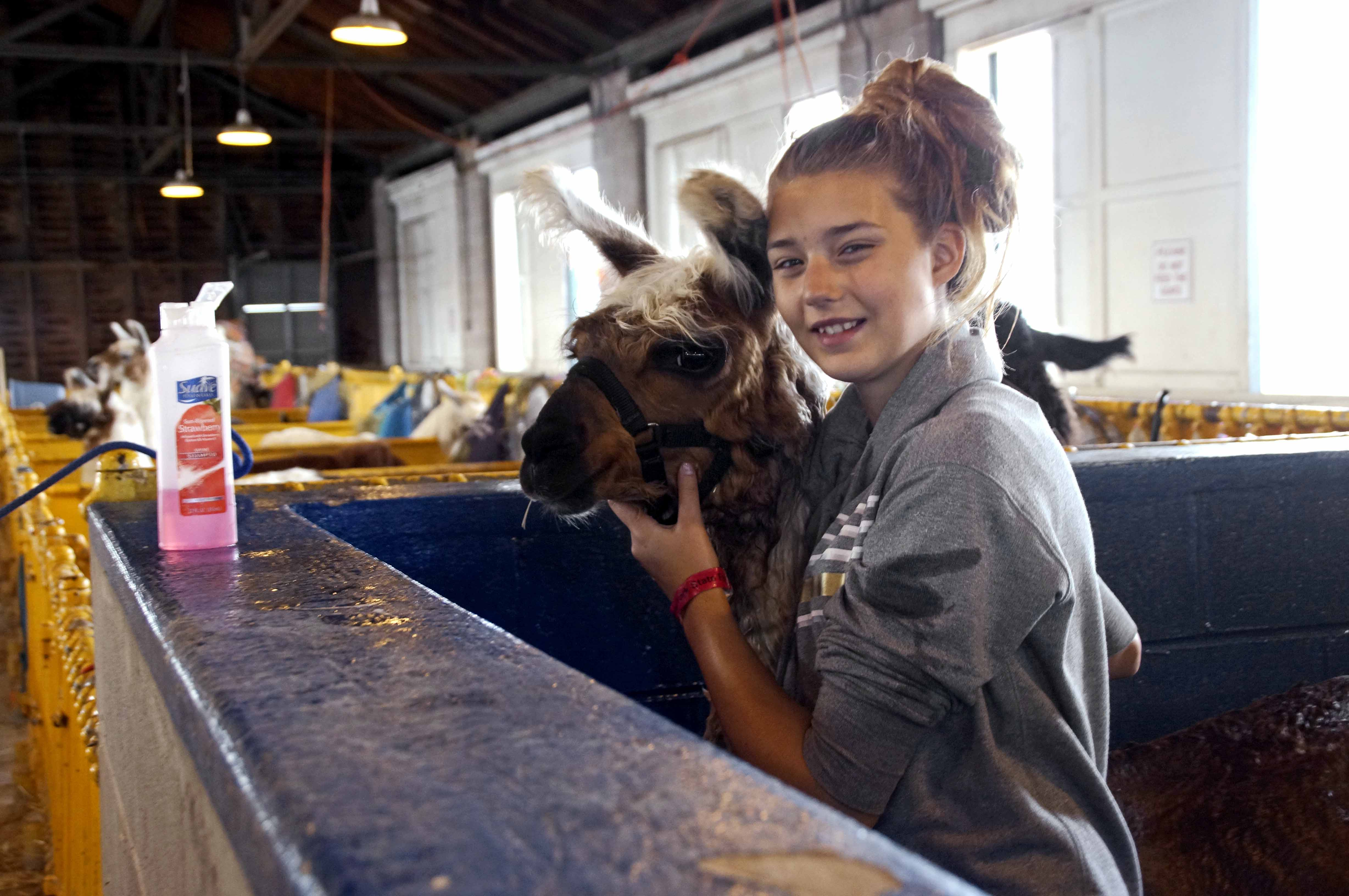 Hundreds of teens brought their hard work and unbridled enthusiasm to livestock competitions.