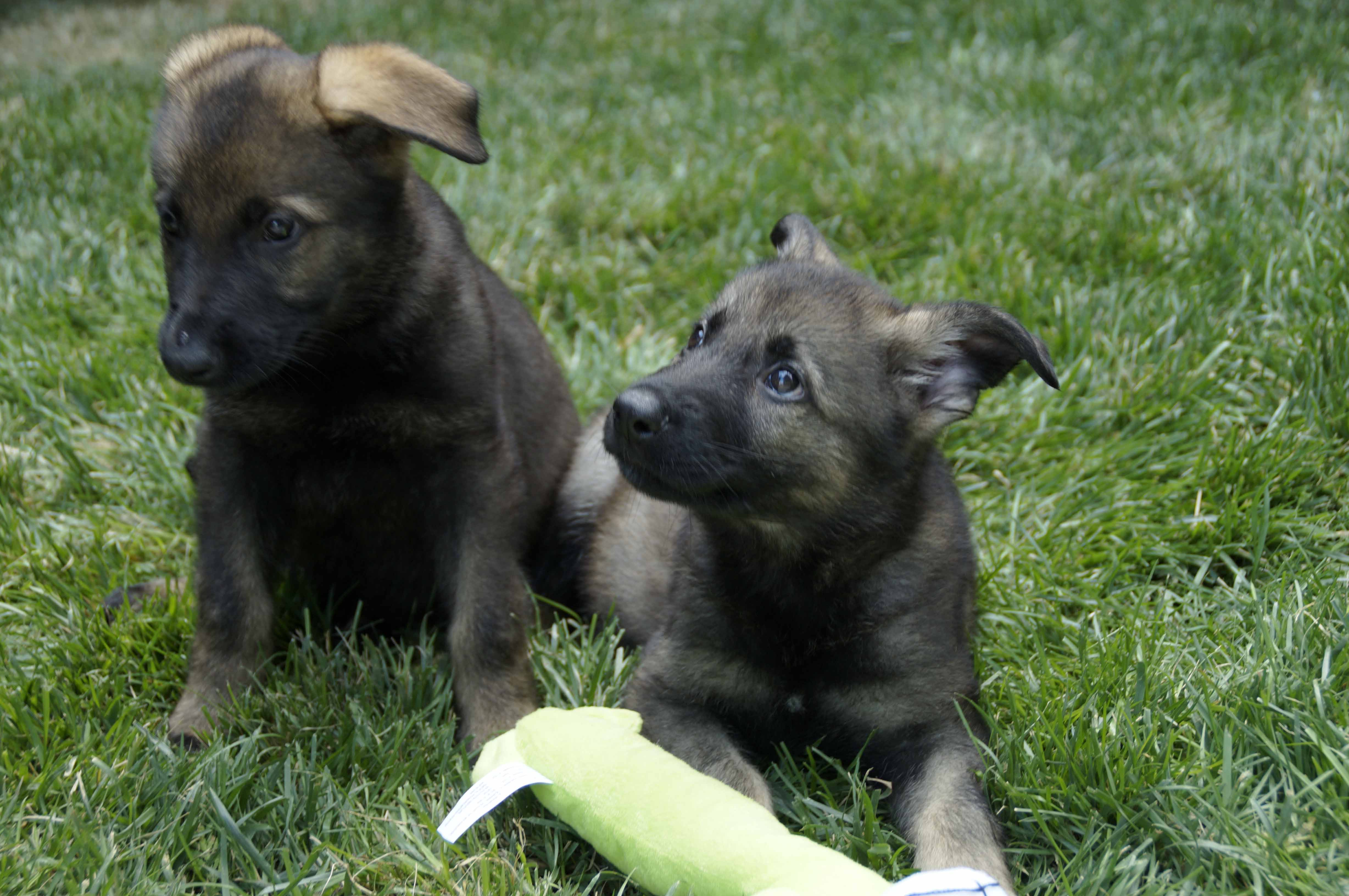 These gorgeous pups have served as goodwill ambassadors for the State Police.